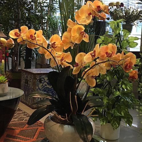 Phalaenpsis amarillo ocre x3