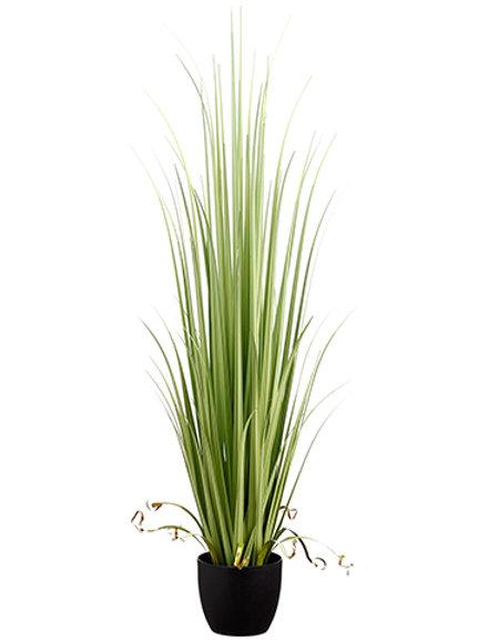 Grass Reed
