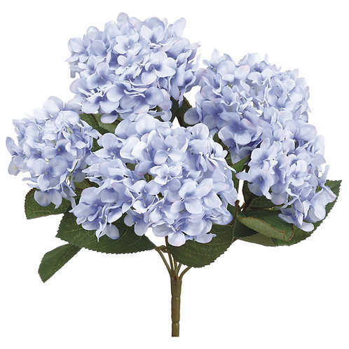 Hortencia bush