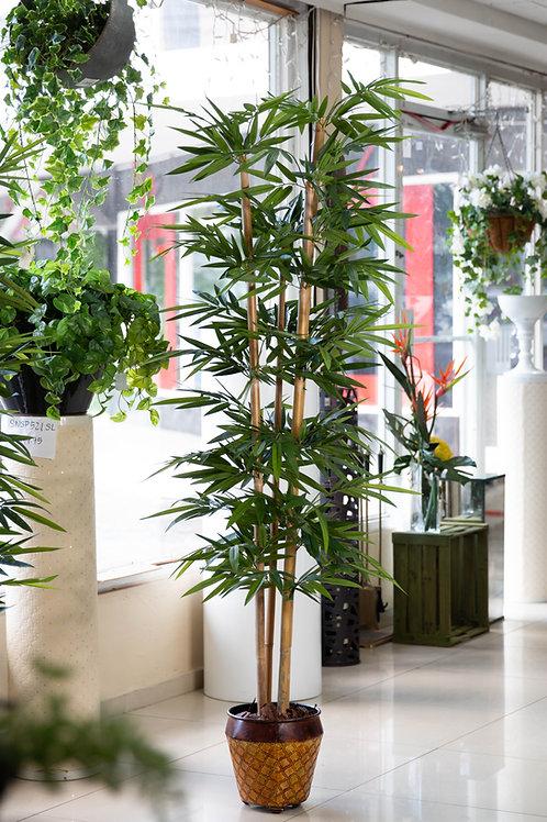Bambú Varas Medianas