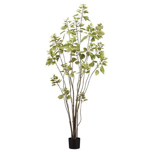 Árbol Cotinus