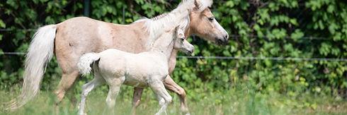 Geboortemelder paard