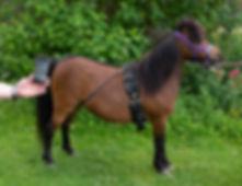 Bird Watch - mini paardjes 20200608-1007