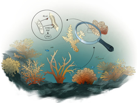Immune response of corals exposed to stressors and competitors