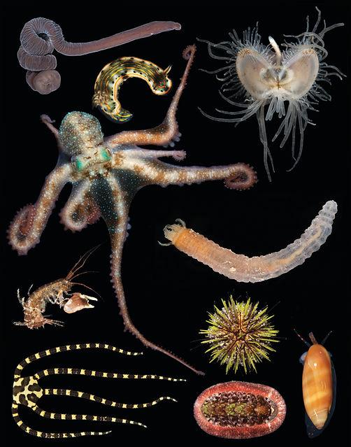 Fig4_Invertebrates.jpg