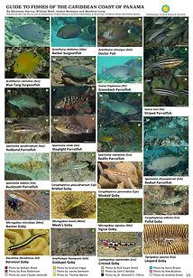 Caribbean fish guide_final3.jpg