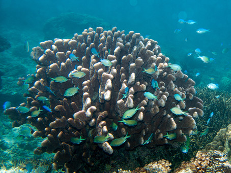 Dietary partitioning as a mechanism for the coexistence of species on coral reefs