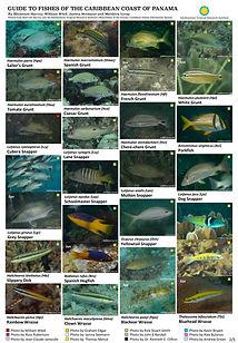 Caribbean fish guide_final2.jpg