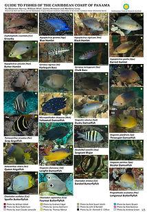Caribbean fish guide_final.jpg