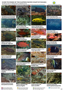 Eastern Pacific fish guide_final_forRLS3