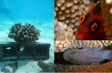 Fish_predation_expMoorea.jpg