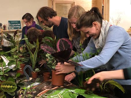 Planten vermenigvuldigen in De Maekerij (Leuven)