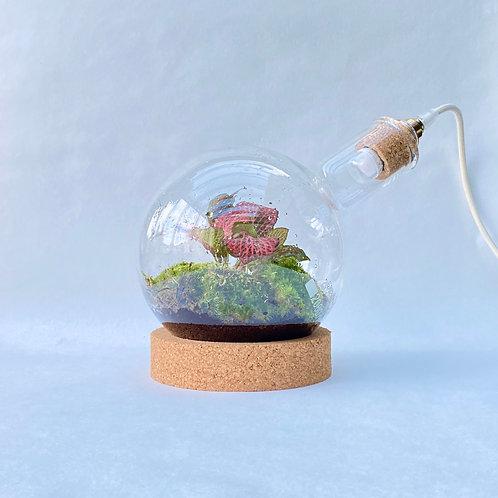 Ronde bodem biosfeer met lamp