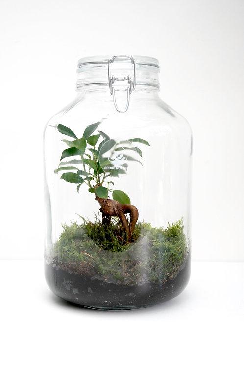 Biosfeer met Ficus