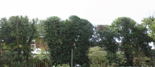 Reduced and shaped hedge