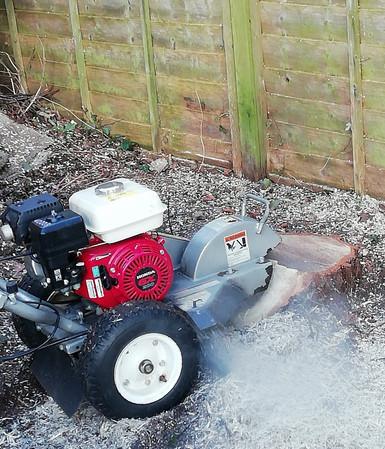 Silver birch removal 3