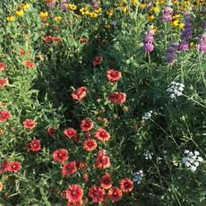 Pollination Garden 2021
