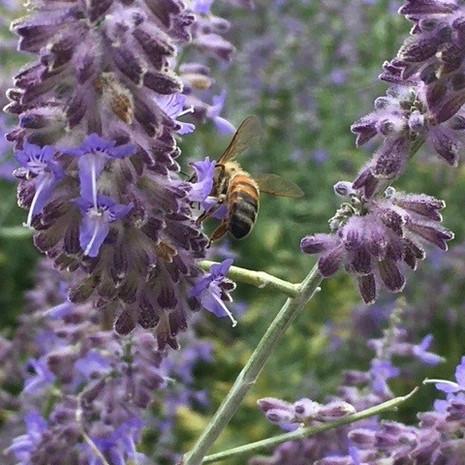 pollination2021.jpg
