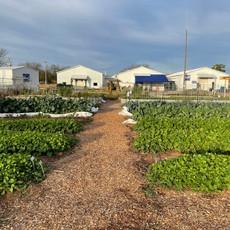 garden after Winter