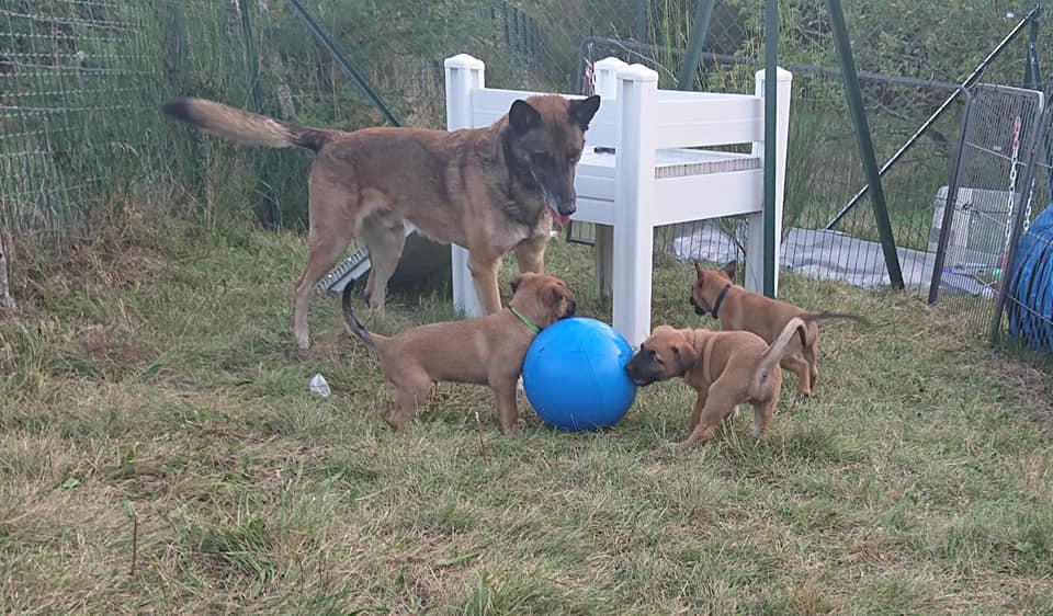 Papa Galdor et les bébés
