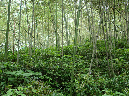 Luxury-Tea-in-Bamboo-Forest-compressor.j