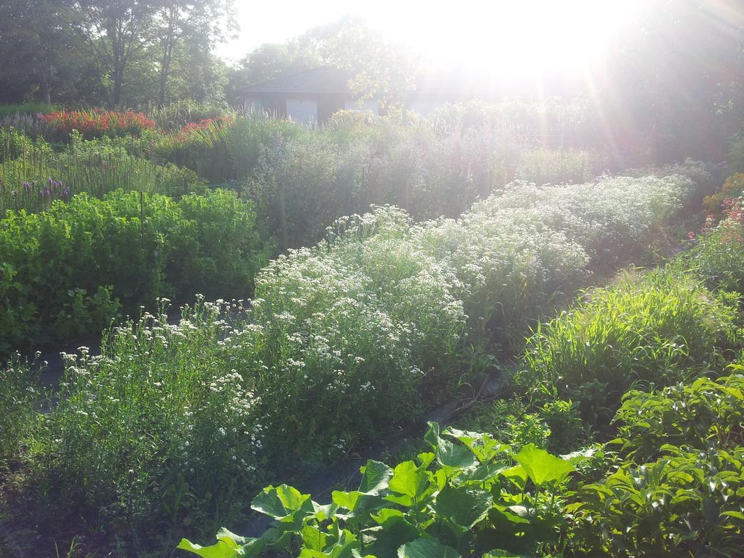 Eva's garden