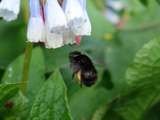 BEE-FRIENDLY SUPPER