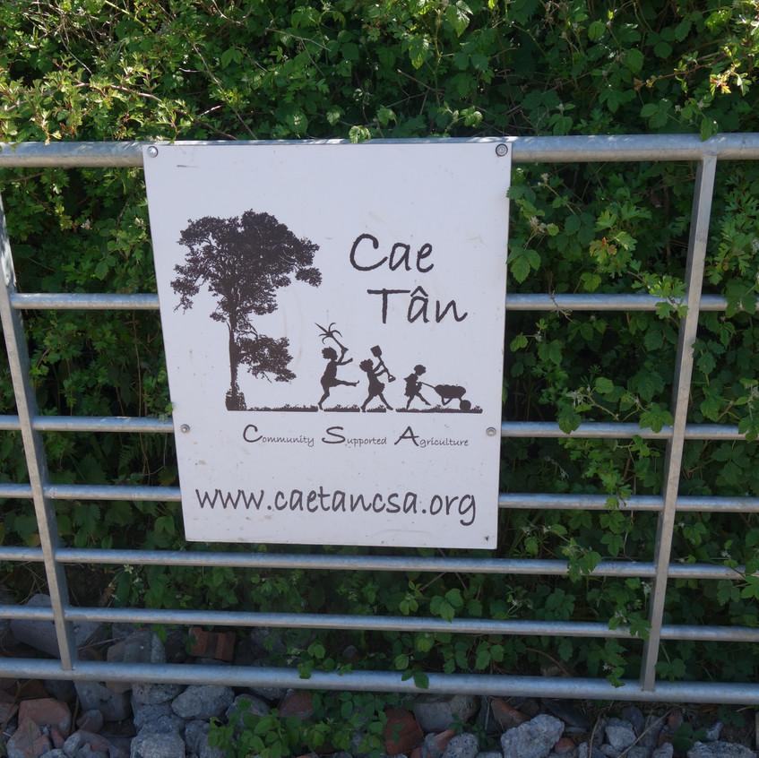 Cae Tan