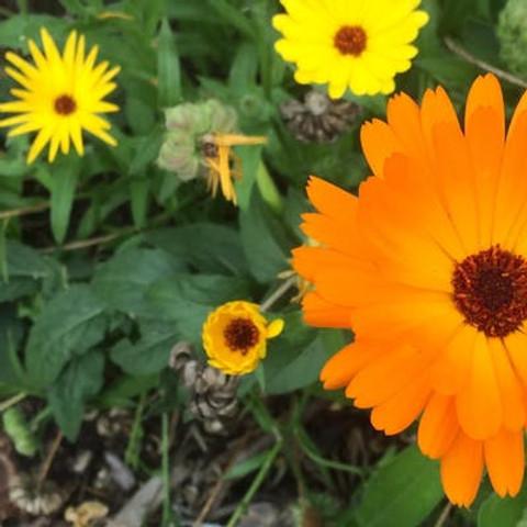 Saving seeds: harvesting, storing and sharing