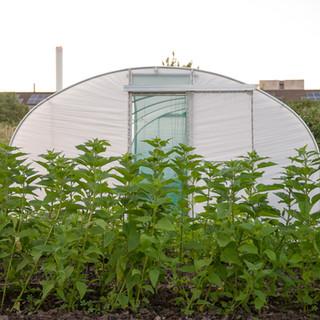 Global Gardens polytunnel