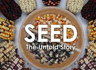 STORIES OF SEEDS @JANUARY SUPPER