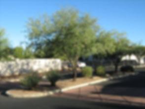 Desert Greens2.JPG