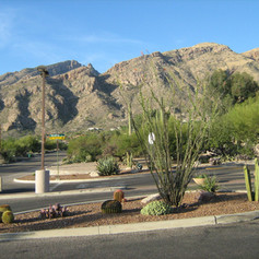 Master Planned Community Landscaping