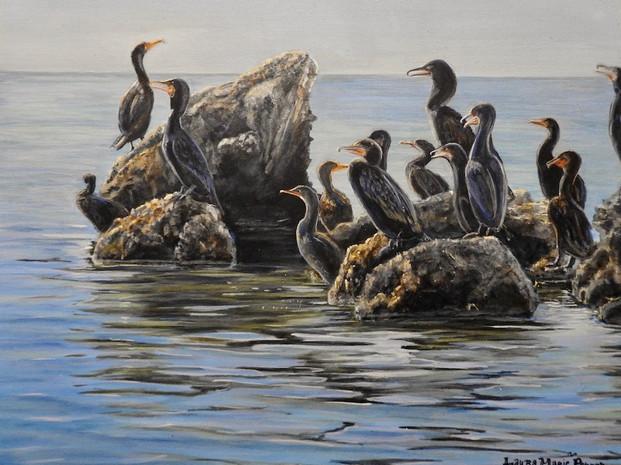 Morning Briefing -Cormorants in Keys (2020)