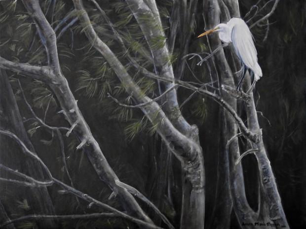 Great Egret - Florida Evergades (2020)