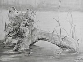 Mallards Resting on Log