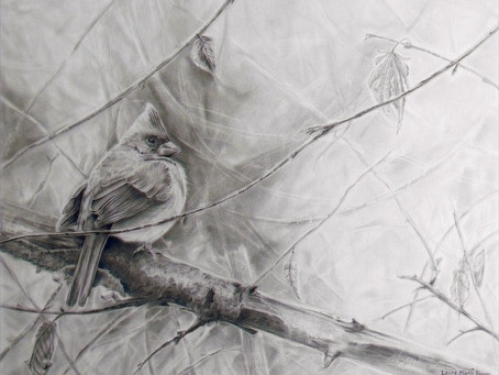 Female Cardinal In Early Winter