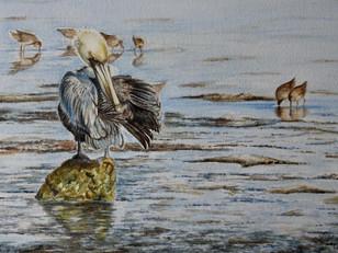 Morning Preen -Brown Pelican (2019)