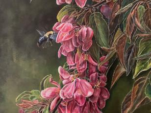 Common Eastern Bumblebee (2020)
