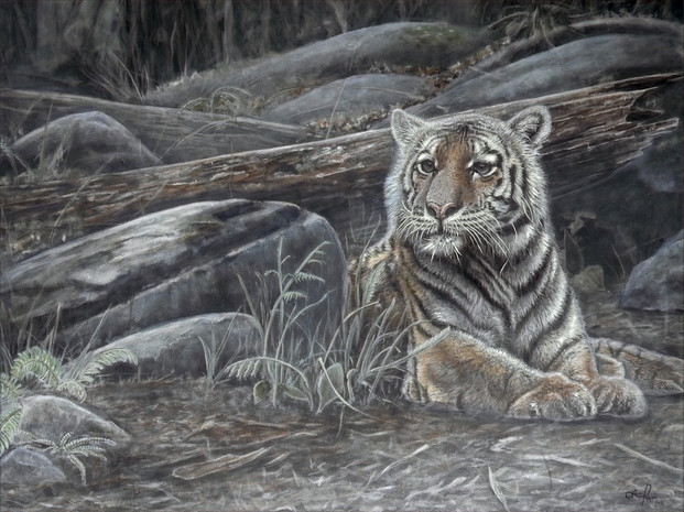Forest Ghost -Amur Tiger (2019)