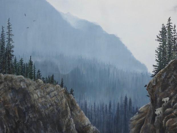 Sure Footed Rocky Mountain Goats -Jasper Ice Field (2019)