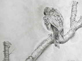 Merlin Grooming -Fundy