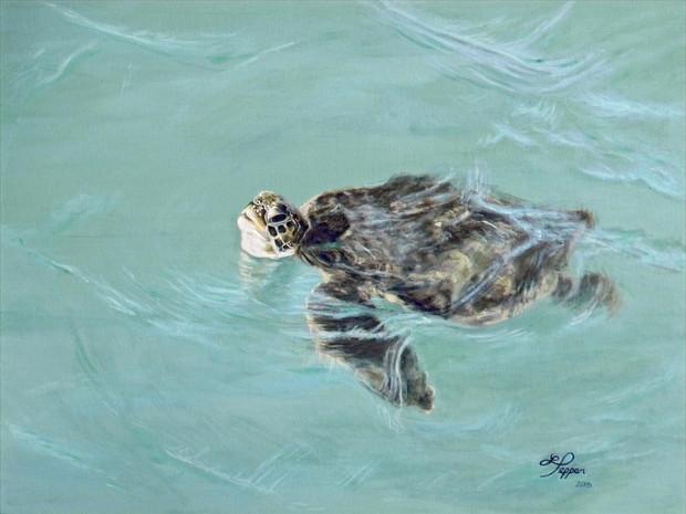 Loggerhead Sea Turtle -Jetty Park