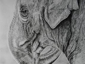 Skin Deep - Asian Elephant