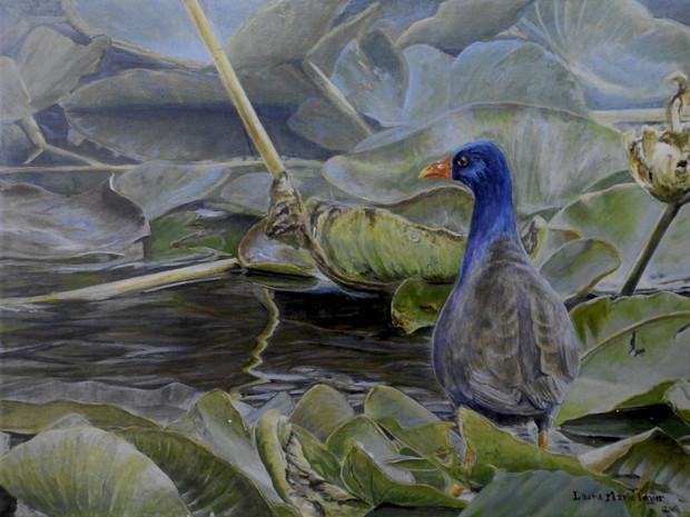 Walking on Water -Purple Gallinule (2019)