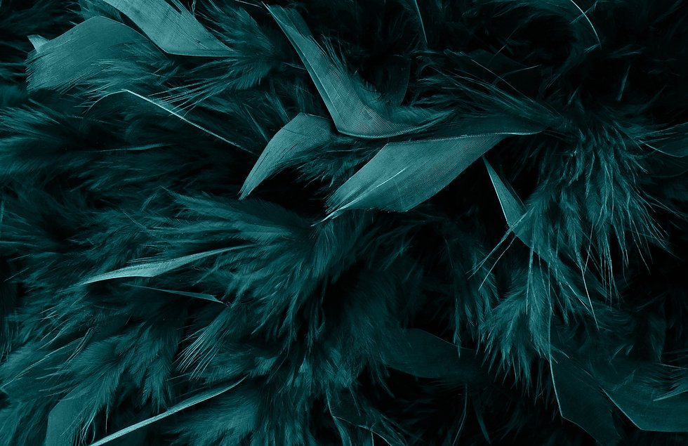 background_feathers.jpg