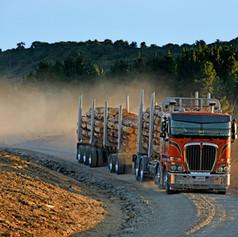 Douglas-Logging.jpg