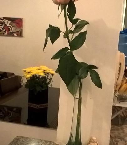 Flores, presente da Cecília A.