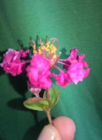 Flores de uma criança :)