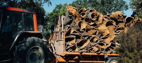 CLESIGN Harvesting cork